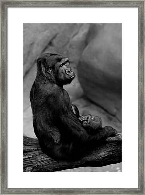 Tender Moment Framed Print