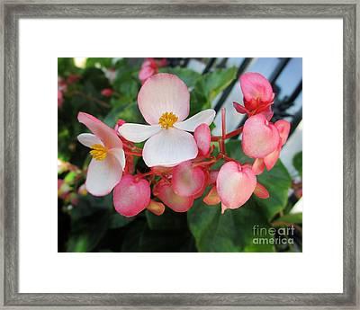Tender Petals Framed Print