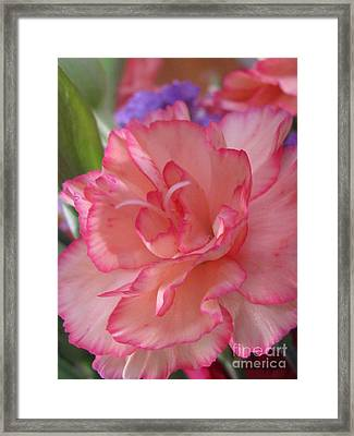 Framed Print featuring the photograph Tender Photography by Tina Marie