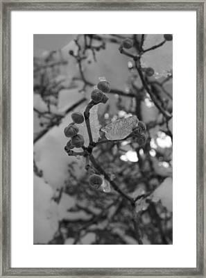 Tender Strength  Framed Print by Hope Williamson