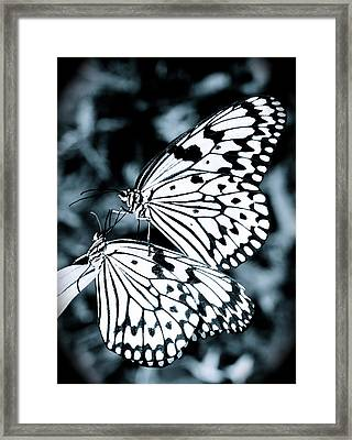 Tender Touch Framed Print by Jocelyn Kahawai