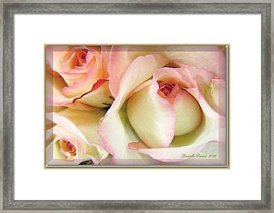 Tenderdly  Rose Framed Print by Danielle  Parent