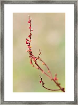 Tenderness In Japanese Style Framed Print
