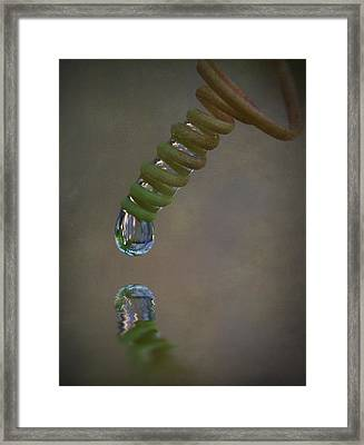 Tendril Droplet  Framed Print by Kym Clarke