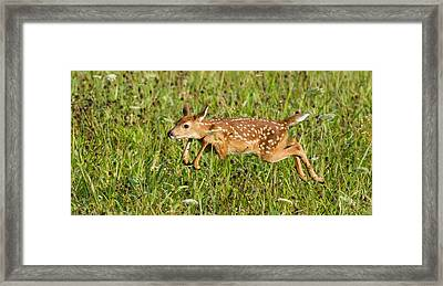 Tennessee Jump  Framed Print by Glenn Lawrence