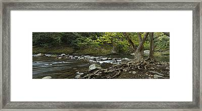Tennessee Stream Panorama 6045 6 Framed Print by Michael Peychich