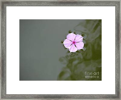 Tenuous Framed Print by Priscilla Richardson