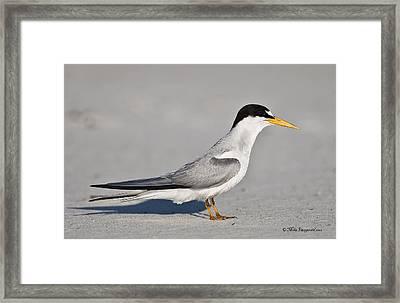 Tern Framed Print
