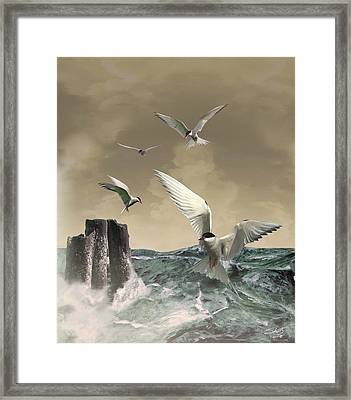 Terns In The Wind Framed Print