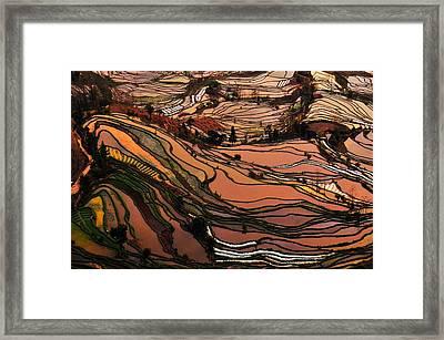 Terrace Field Framed Print by MelindaChan