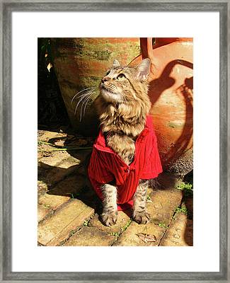 Terracotta Framed Print
