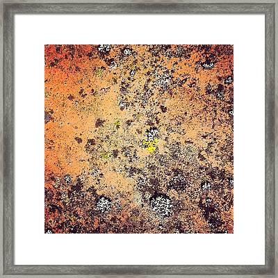 Terracotta Life Framed Print