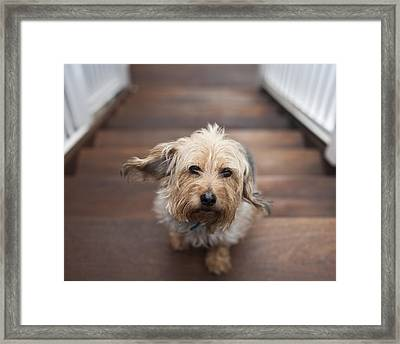 Terrier Framed Print by Jody Trappe Photography