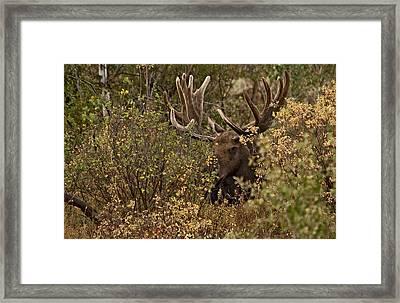 Teton Giant  Framed Print by Eric  Nelson