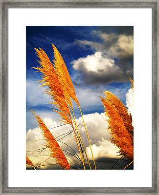Texas Breeze Framed Print