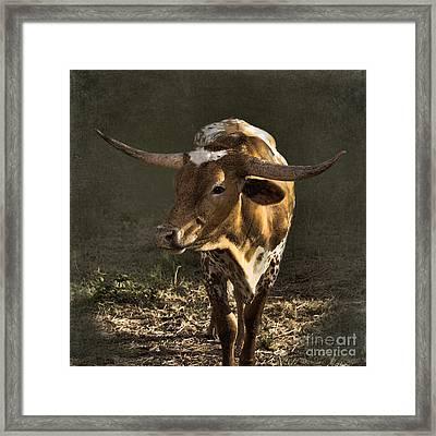 Texas Longhorn # 4 Framed Print by Betty LaRue