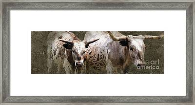 Texas Longhorns Framed Print by Betty LaRue