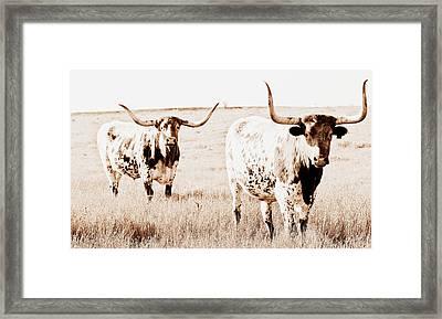 Texas Pair Framed Print by Elizabeth Hart