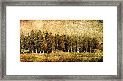 Textured Trees Framed Print by Linde Townsend