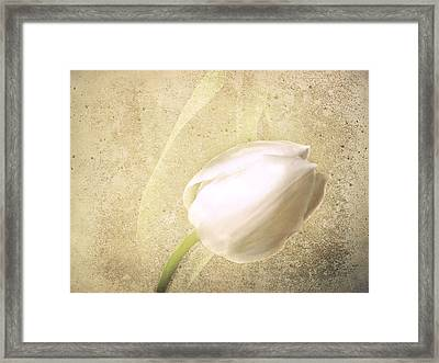 Textured Tulip Framed Print by Fiona Messenger