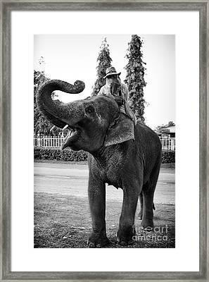 Thai Elephant Roar Framed Print