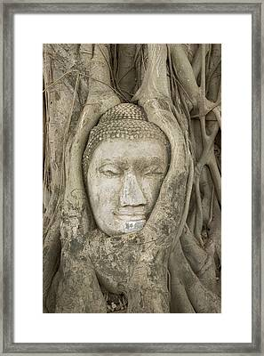 Thailand, Ayutthaya, Sculpture Of Buddha Head In Tree Roots Framed Print by Gavriel Jecan