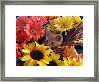 Thanksgiving Kitten Sitting In A Flower Basket Peeking Through Sunflowers - Kitty Cat In Falltime  Framed Print by Chantal PhotoPix