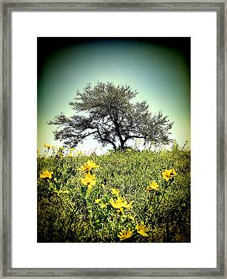 That Tree Framed Print