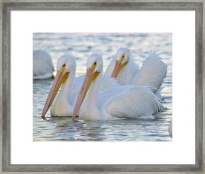 The 3 Amigos Framed Print