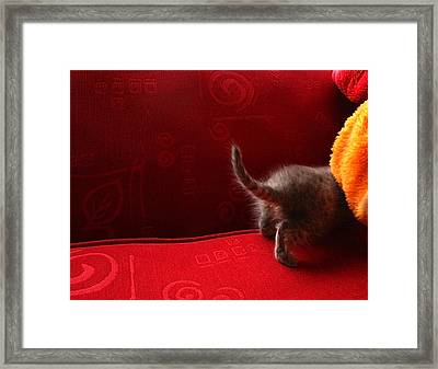 The Absent-minded Kitten Framed Print by Barbara  White