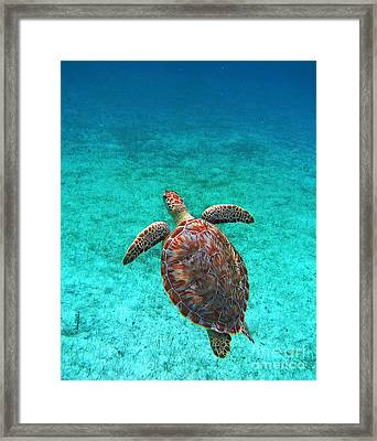 The Ascension Framed Print by Li Newton