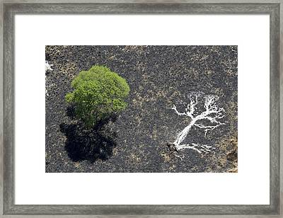 The Ashes Of A Burned Tree And A Live Framed Print by Michael Poliza