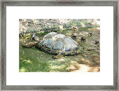 The Babysitter Framed Print by Jan Amiss Photography