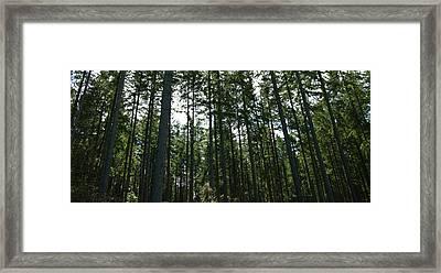 The Back Forty Framed Print by Travis Crockart