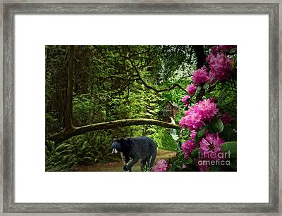 The Bear Went Over The Mountain Framed Print by Lianne Schneider