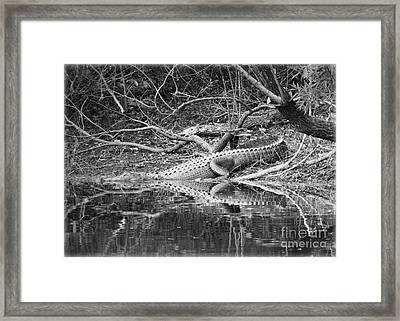The Beast That Lives Under The Bridge Framed Print