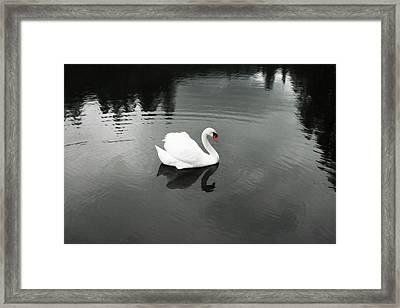 The Beautiful Biting Bastard  Framed Print by Janet Kearns