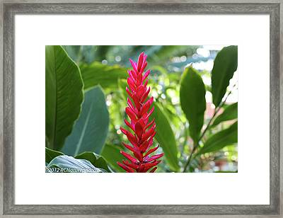 Framed Print featuring the photograph The Beauty And The Bokeh by Rachel Cohen
