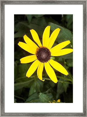 Framed Print featuring the photograph The Beauty Of A Single Daisy by Shawn Hughes