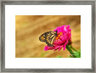 The Beauty Of Flowers Framed Print by Tamera James