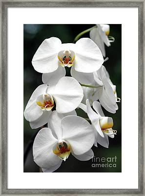 The Beauty Of Orchids  Framed Print