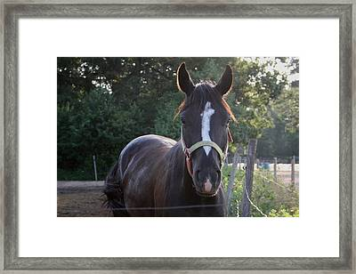 The Beauty Of The Horses Framed Print by Valia Bradshaw