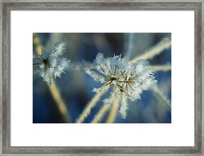 The Beauty Of Winter Framed Print by Ellen Heaverlo