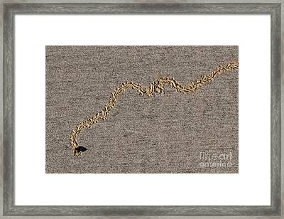 The Bee-line Framed Print
