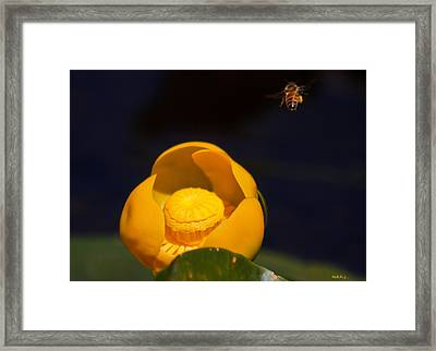 The Bee Framed Print by Mitch Shindelbower