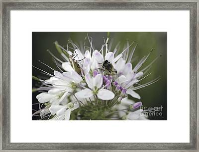The Beetle And The Bee Framed Print