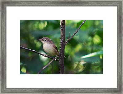 The Best Singer Of The Woods And Fields Framed Print