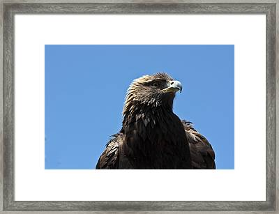 Framed Print featuring the photograph The Big Bird by Nick Mares