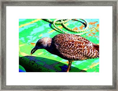The Bird Framed Print by Amanda Pillet