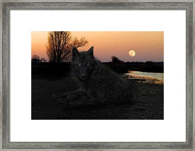 The Black Lone Wolf Framed Print